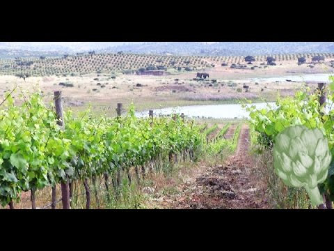 The Portuguese Wine You Should be Drinking | Potluck Video
