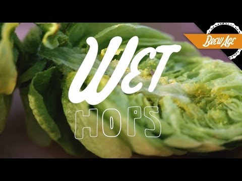 How Wet Hops Will Make Your Beer Amazing